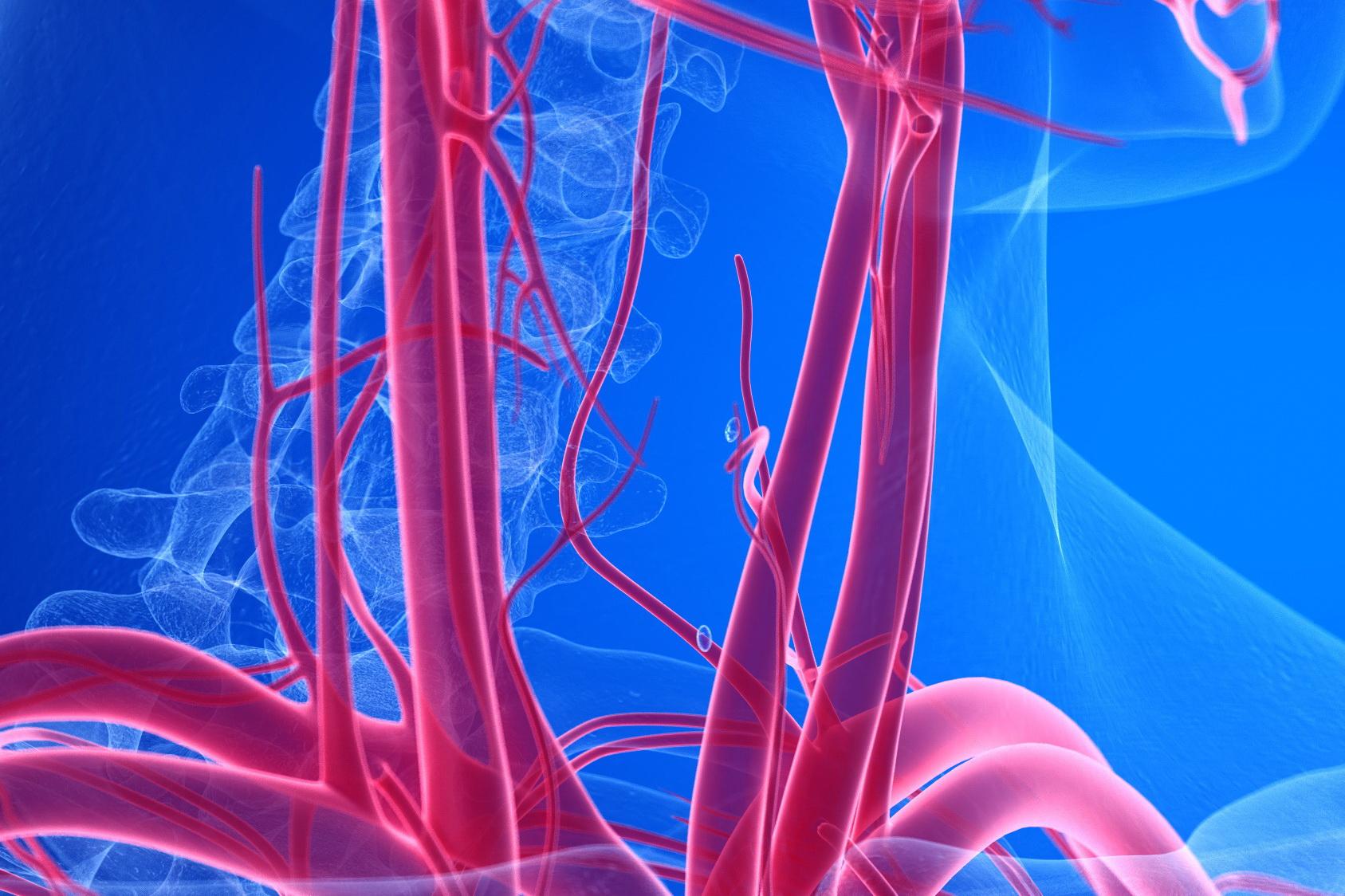 Ultraschall Halsgefäße